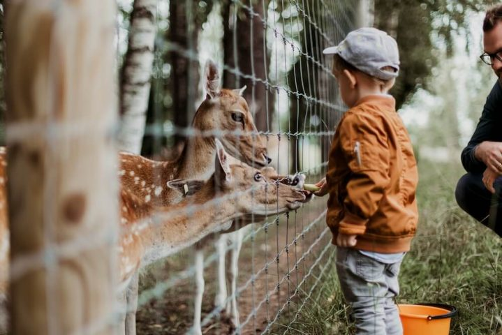London S Best Farms And Zoos For Children The London Mother