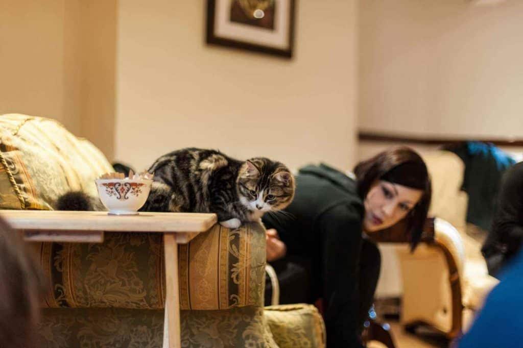 Lady Dinah's Cat Emporium cafe
