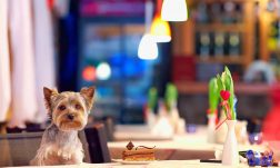 Pet cafés seem to be popping up all over London and beyond. Here are our 5 favourite spots where patrons can get their caffeine and cuddle fix in one go.