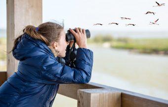 bird watching London