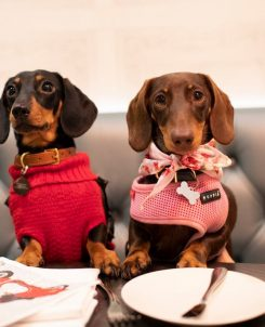 a list of the UK's best pet cafes