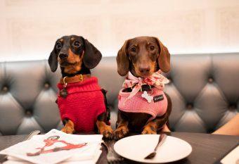 a list of the UK's best pet cafes
