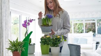 10 easy house plants