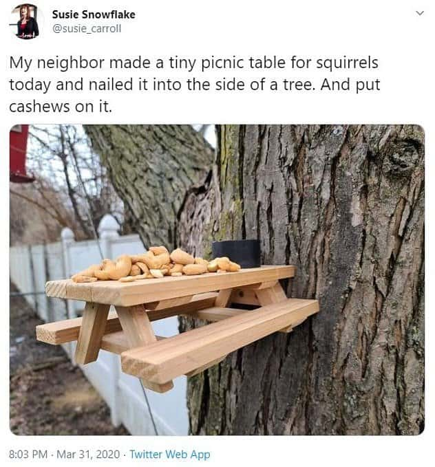 Build a squirrel picnic table