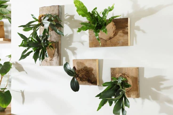 how to make a staghorn-fern-living display