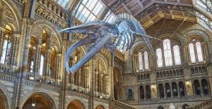 Hope Whale Natural History museum Hintze Hall 2017
